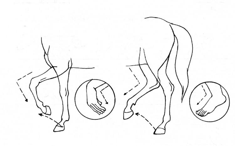 马步态3.jpg