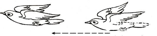 鸟.png