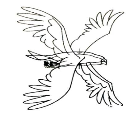 鸟3.png